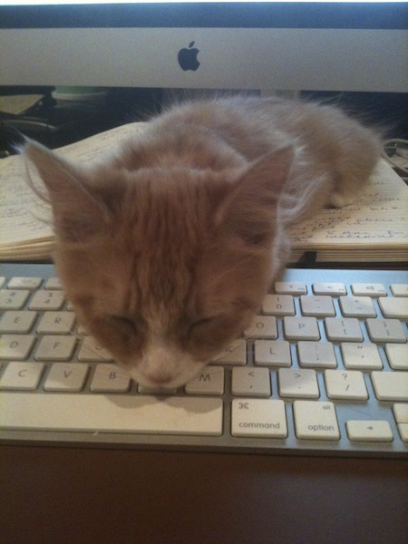 Cat asleep on keyboard