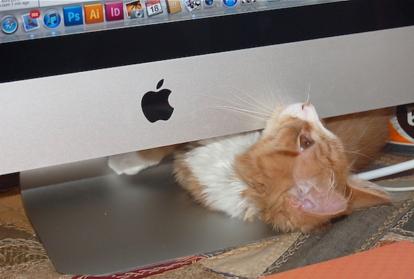 Cat peaking out from under computer monitor