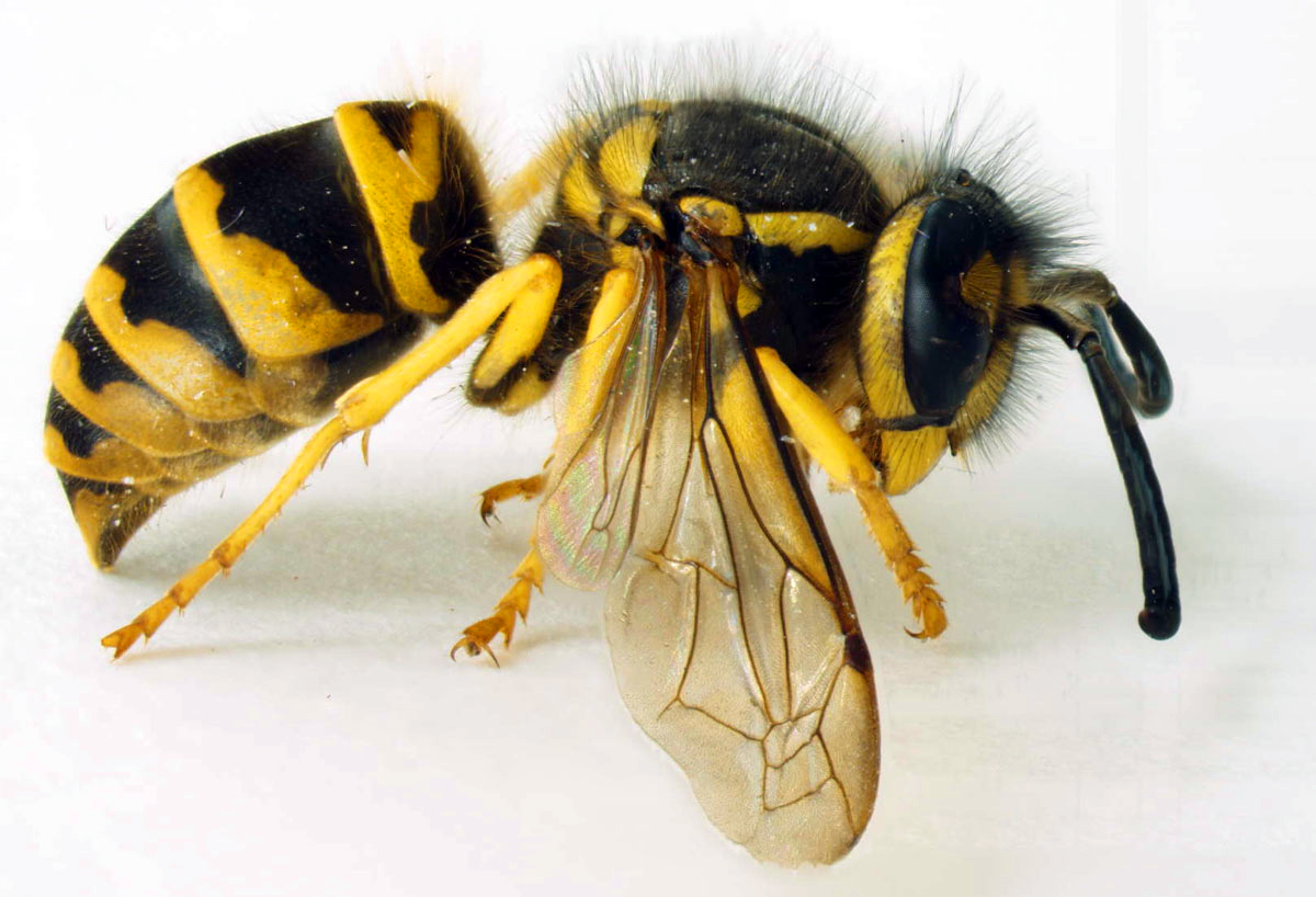 Deadly Insect Stings Catching Health With Diane Atwood