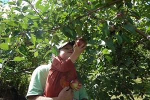 Courtesy Hope Orchards