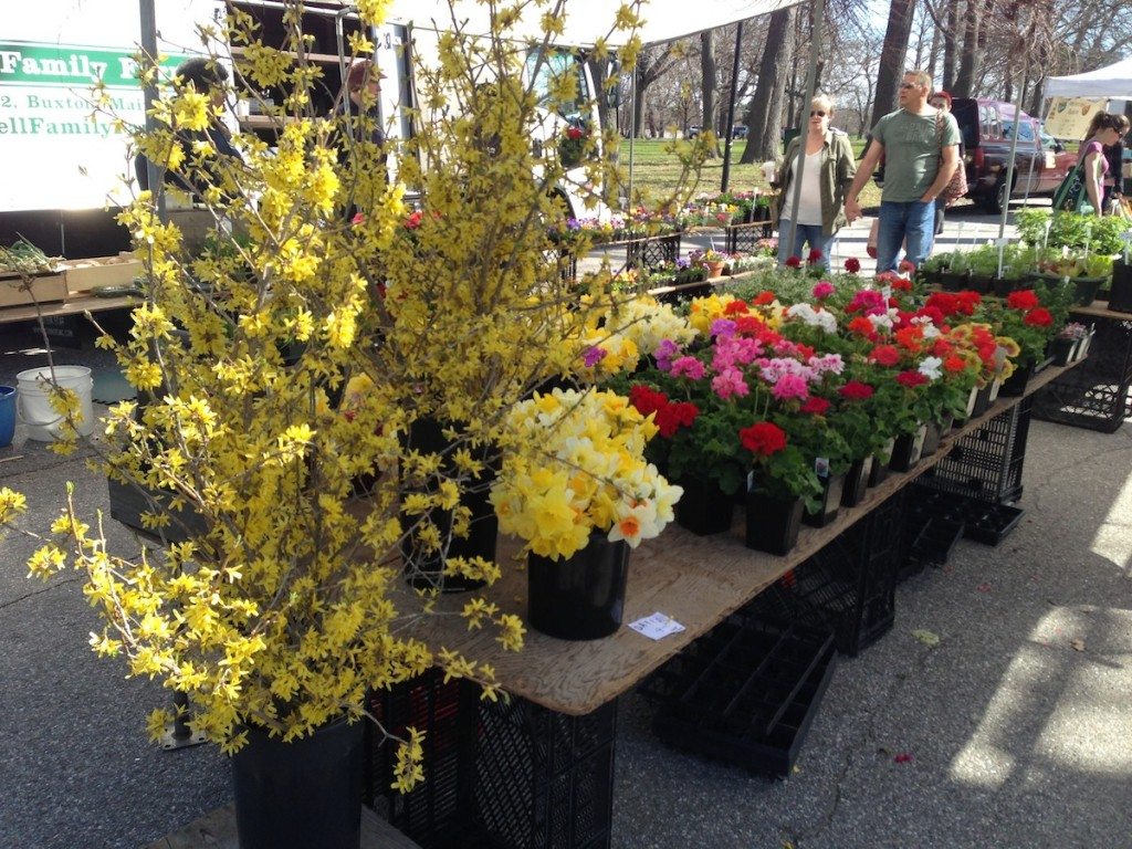 Spring flowers at the Farmers' Market