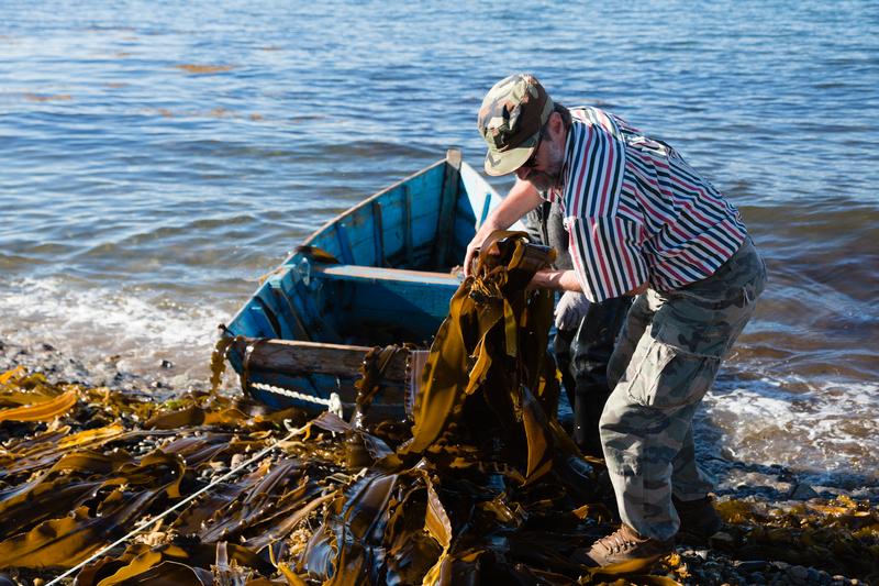 Seaweed harvester