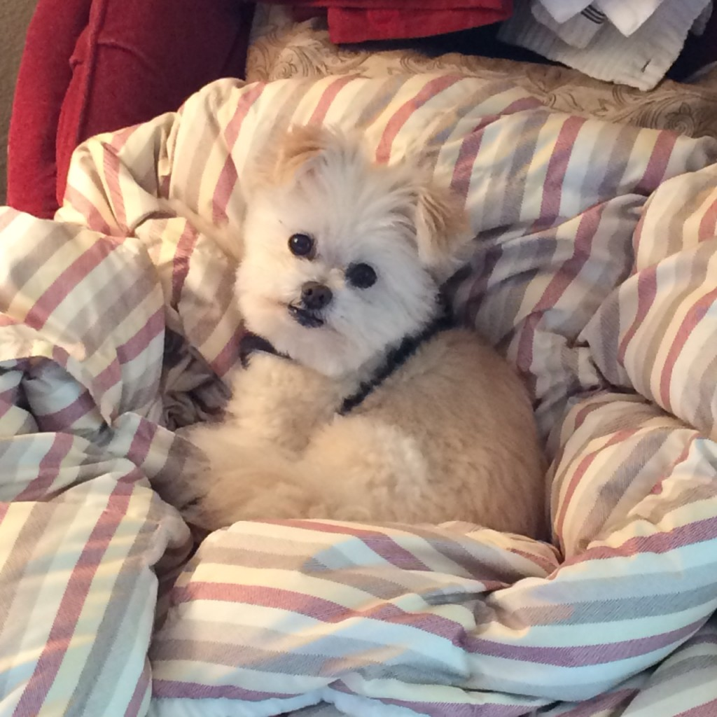 Wiper, dog with Lyme Disease, feeling better