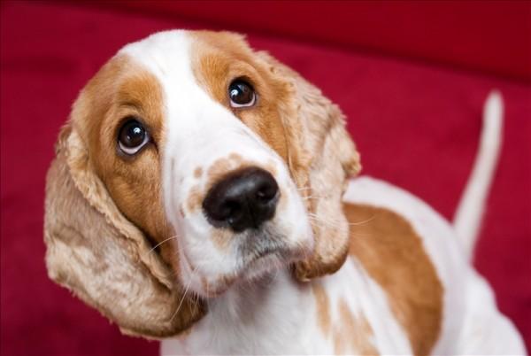 Cute doggie safe holidays