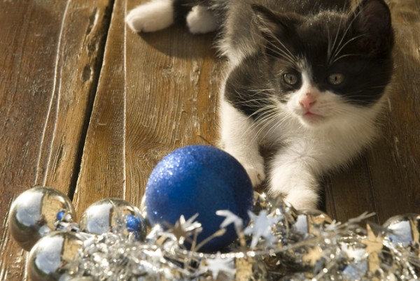 Kitten with decorations/safe holidays