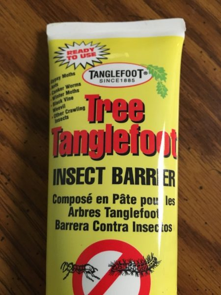 Tanglefoot for deer flies