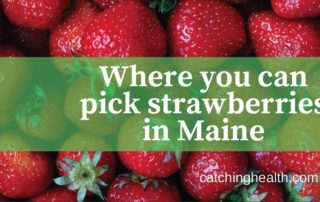 Strawberries in Maine