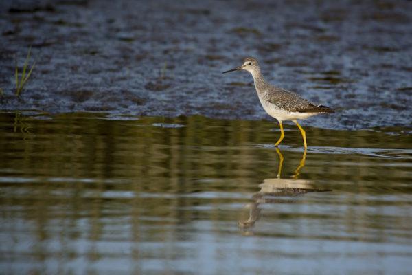 Bird in Scarborough Marsh