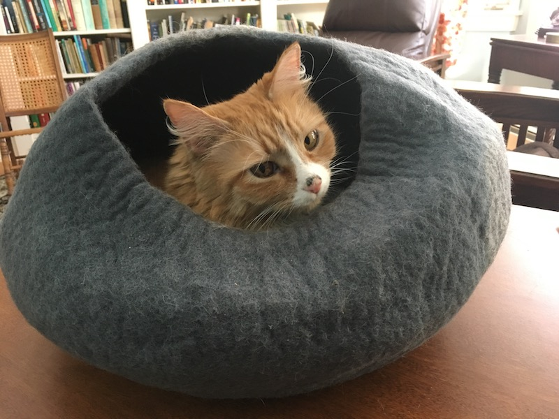 Charlotte in kitty bed