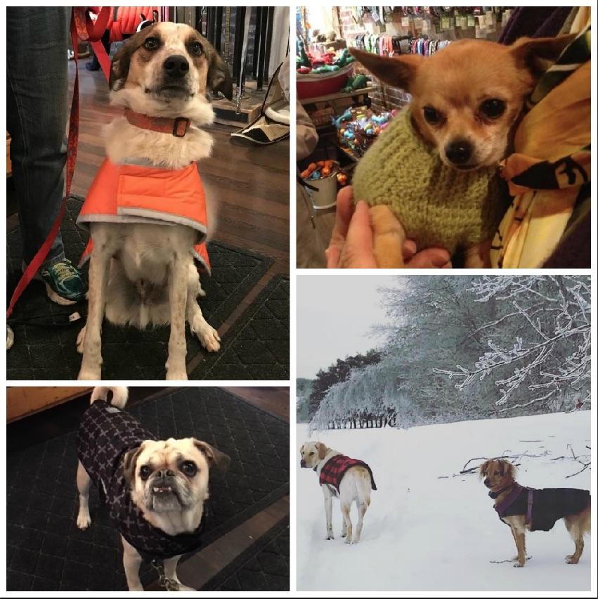 Dog winter coat collage