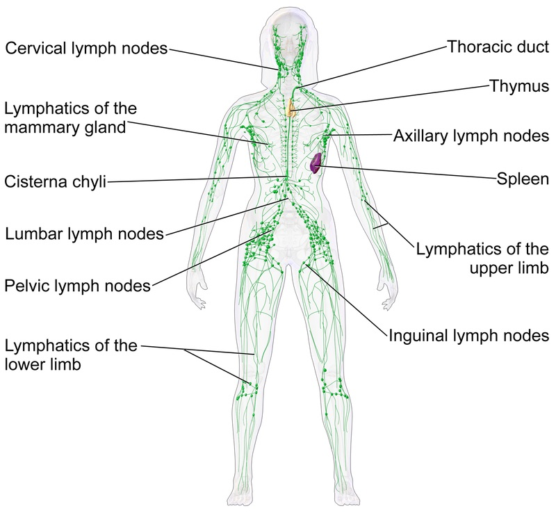 Simple exercises for lymphatic drainage and a healthy immune system ...