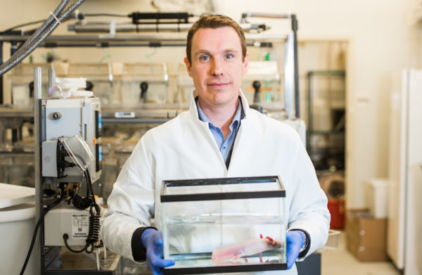 James Godwin, Ph.D/salamander regeneration