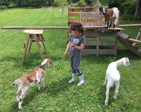 Nora feeding goat