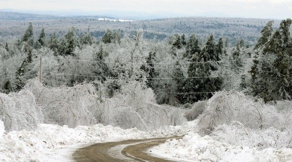 Ice covered trees/Medicare fraud
