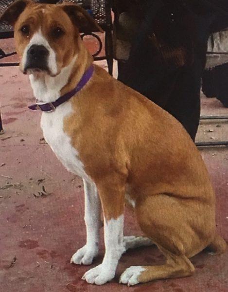 Keeva, a service dog