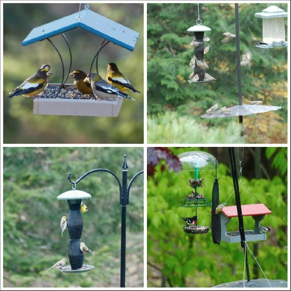 Wayne's bird feeders