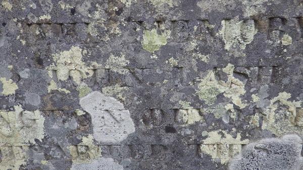 Lichen on a headstone in Newfoundland, Canada