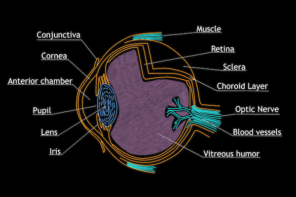 Illustration of the eye/Adobe Image