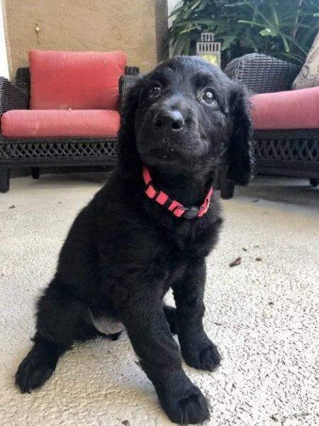 Demi, Crystal's service dog