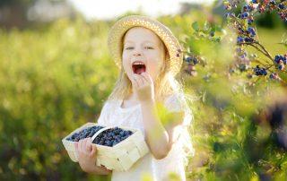 child eating blueberries