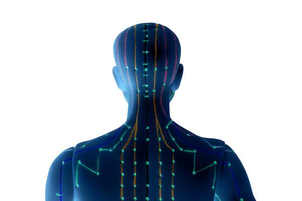 Meridians, acupuncture