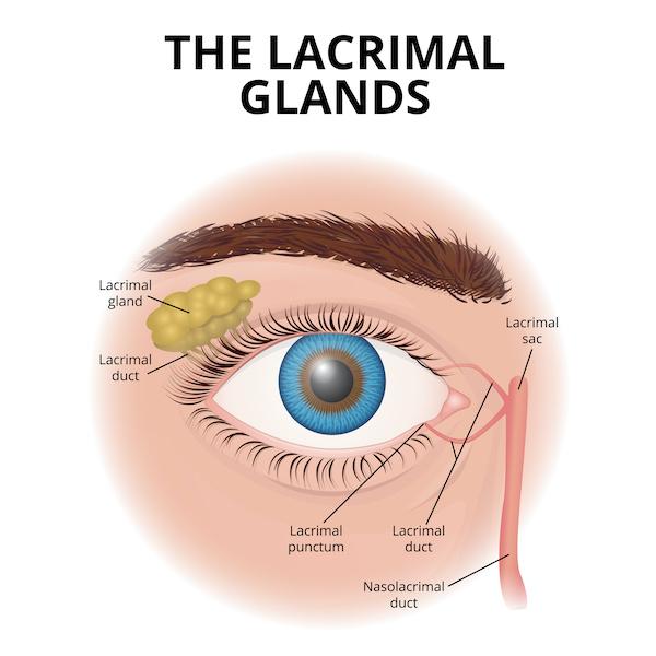 Dry eyes lacrimal glands